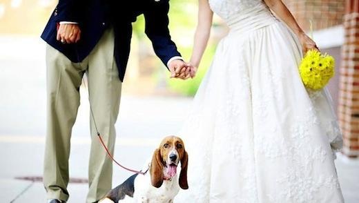 everlasting elopements coupon code