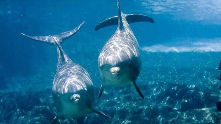 Dolphin Swim Tour For an Adult