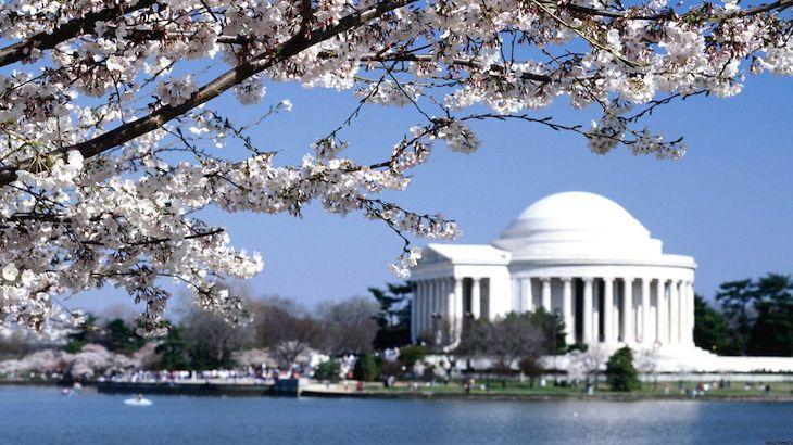 Washington D.C. Tour for One Person