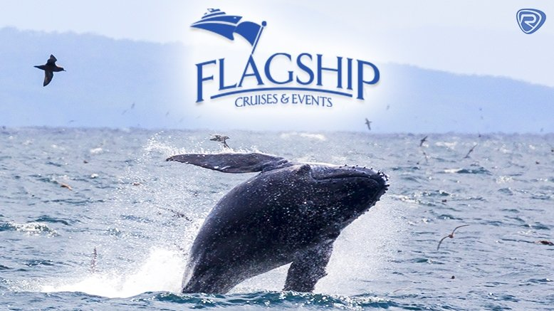 3.5 Hour Weekday Whale Watching Tour for 1