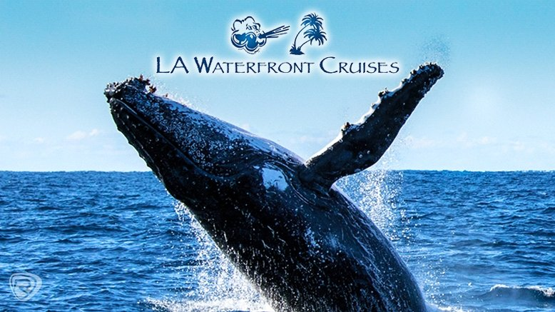 Whale Watching Boat Tour for 1