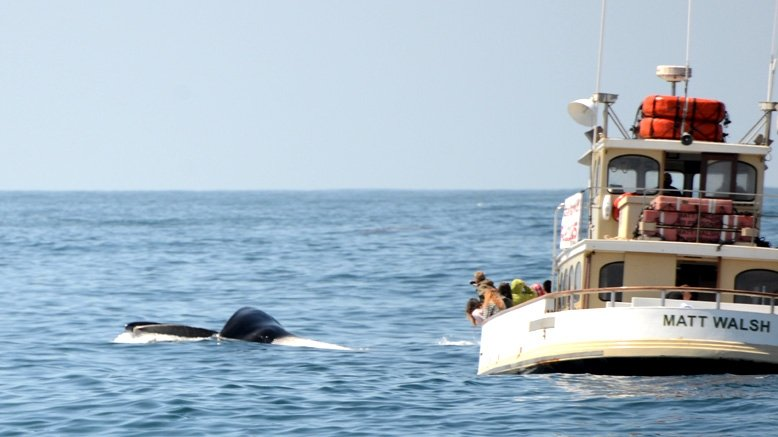 Whale Watching & Nature Cruise For 1 Adult