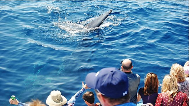One Junior Whale Watching And Dolphin Ticket