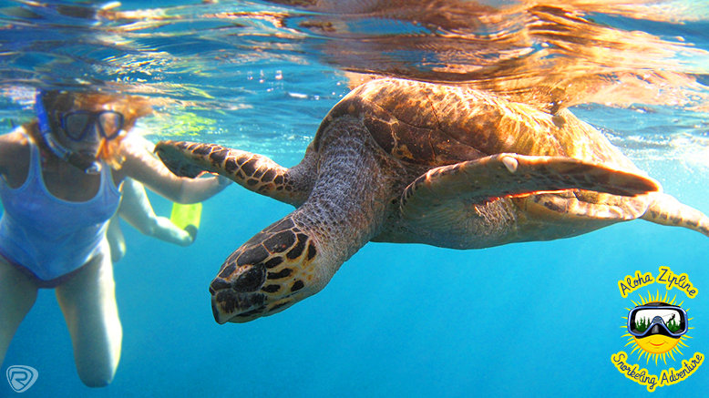 Full-Day Ziplining and Snorkeling Adventure for 1