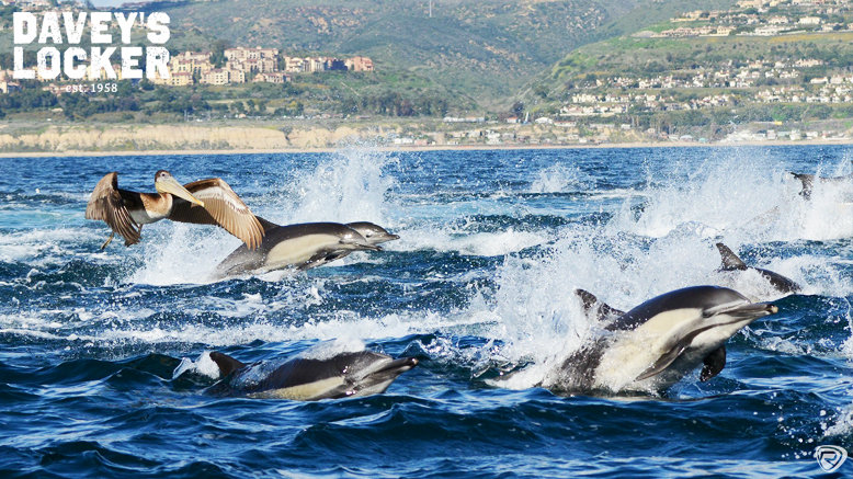 Junior Whale Watching and Dolphin Cruise for 1, Valid for ages 3-12