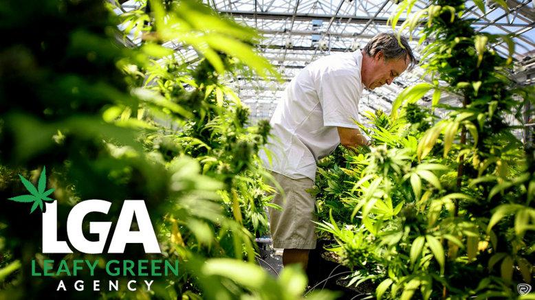 GA to Medical Marijuana Budtender & Brand Ambassador Sales Training