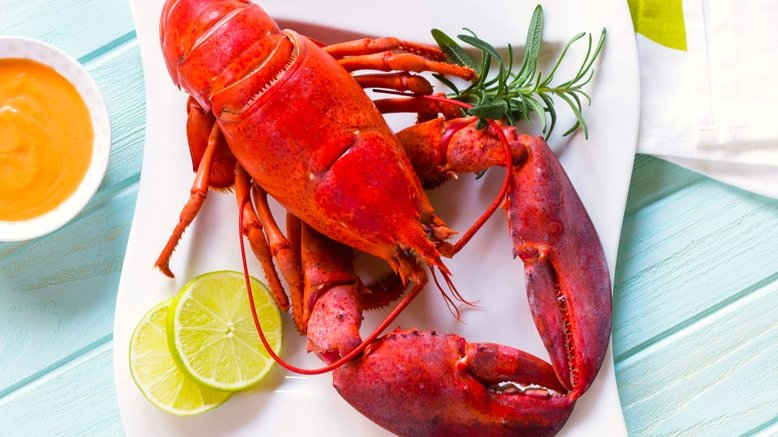 8 Live Maine Lobsters & Overnight Shipping