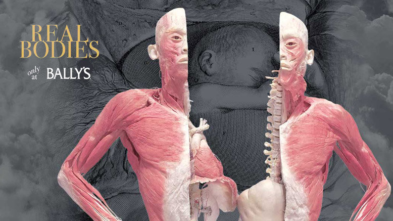 1 Adult General Admission to Real Bodies at Bally's (E-TICKET)