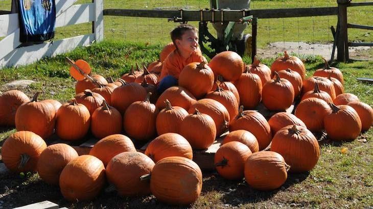Entry to Charmingfare Farm's 'Pumpkin Festival' in Candia, NH