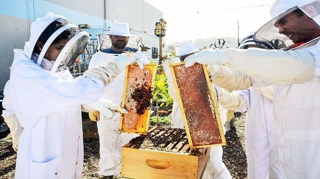 3-Hour Beekeeping Class For Two