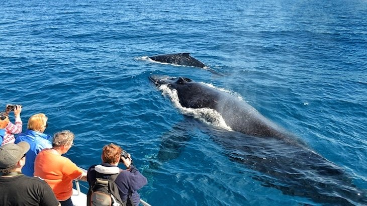 A 4.5-hour whale-watching tour for ONE