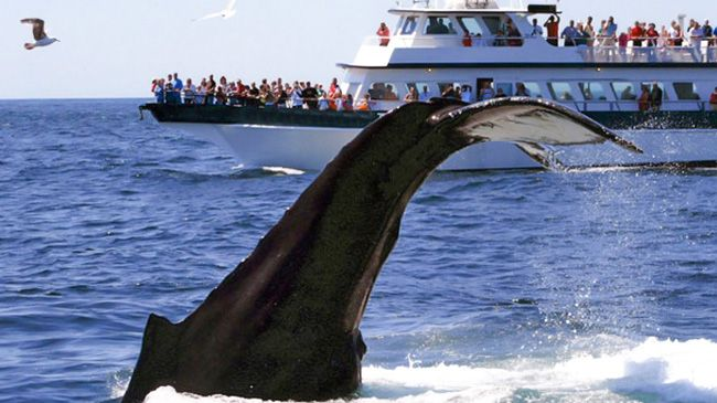 Whale-Watching Tour for One