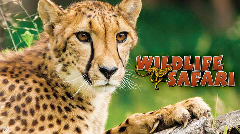 1 Child Ticket to Wildlife Safari