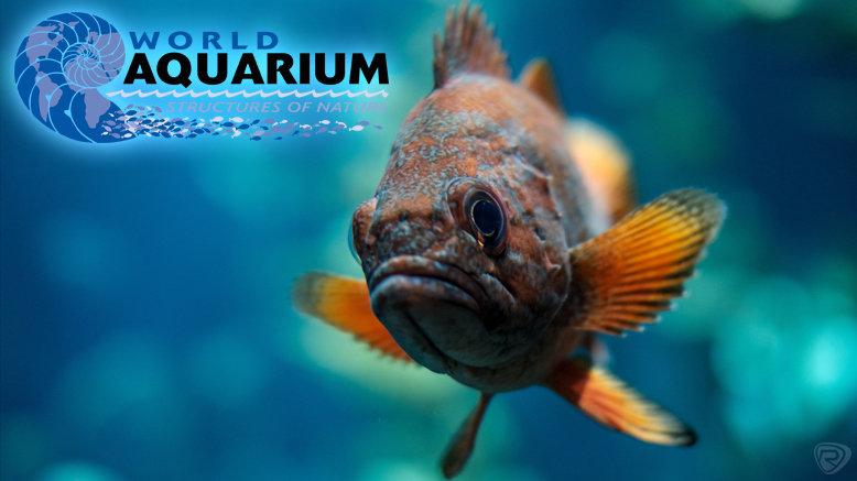 World Aquarium St Louis 74% Discount Tours